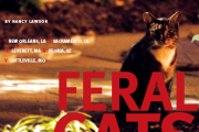 Feral cats - A tale of five cities