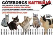 Rivlappsaffisch katter för adoption